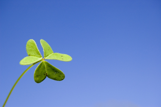 Consultancy led teams: The third leaf of the shamrock